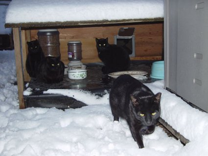 Winter Cat Shelters For Feral Cats Urbancatleague